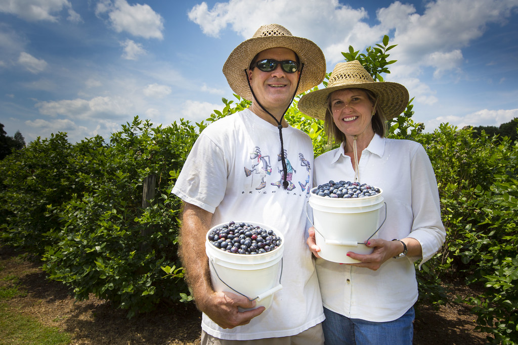 Lakeland Berries at Shady Oaks Farm