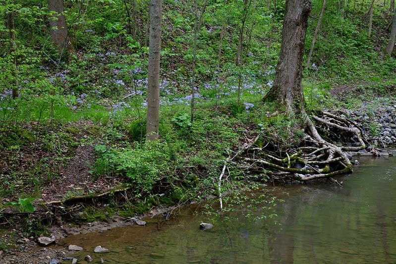 Canoe Creek State Park