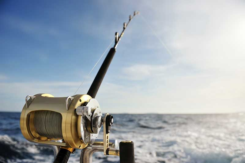 Sport Fishing and Whale Watching